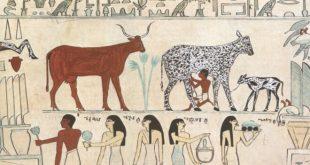 как се появили първите скотовъдци