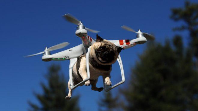 Снимка на дрон и куче