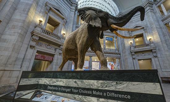 Националният музей по естествена история във Вашингтон, Окръг Колумбия