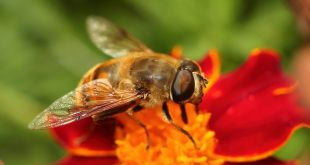 пчели роботи