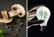 Създадоха бионични гъби, които произвеждат електричество