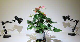 цвете робот