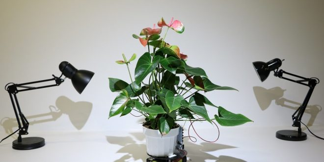 Учени от Масачузетс създадоха цвете робот, което се движи само