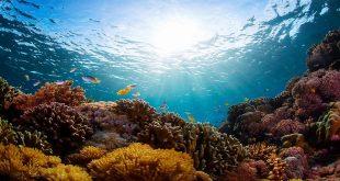 Възстановяване на океанските системи – път дълъг 2 милиона години