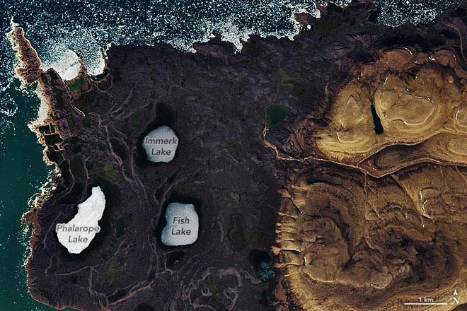 Низините Truelove, Растения на Марс