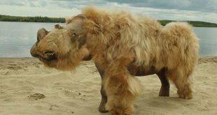 Вълнист носорог
