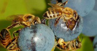 Учени създадоха първата глобална карта на видовете пчели