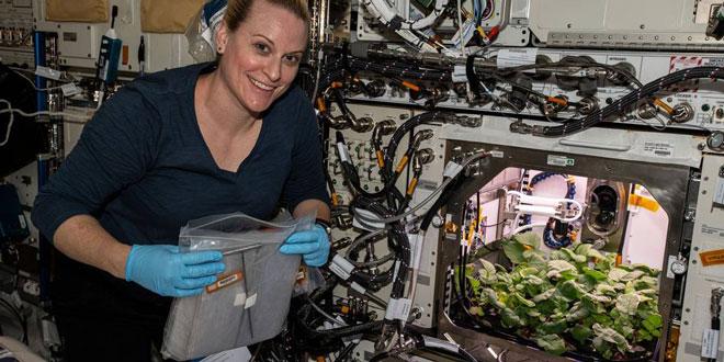 Астронавтите на МКС събраха първата реколта космически репички