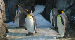 Откриха липсващото звено за настъпването на ледникови периоди на Земята